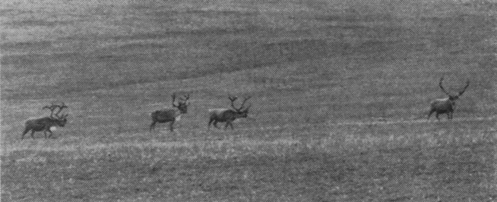 Foto sacada polo propio David Klein na súa visita en 1957.