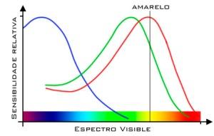 Esquema das partes do espectro visible ás que  cada receptor é máis sensible.